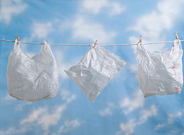 essay on polythene bags pollution