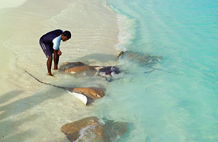 Feed A Flock Of Stingrays In The Maldives 25 More