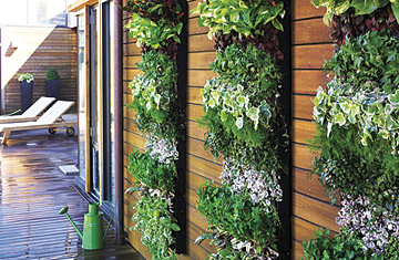 Vertical Garden Panel http://www.time.com/time/specials/packages/article/0,28804,1892751_1892659_1892649,00.html