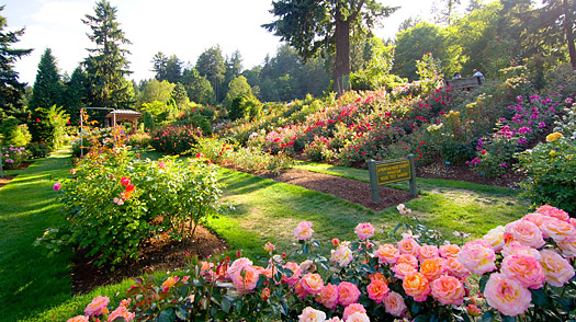 Portland Things To Do International Rose Test Garden TIME - 10 things to see and do in portland