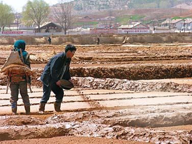 north korea famine essay The north korean famine essay during the 1990s, north korea has experienced a famine leaving a range of 600, 000 to 1 million deaths because of that tragedy.