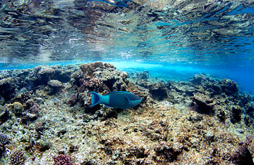 Why should we preserve the Great Barrier Reef?