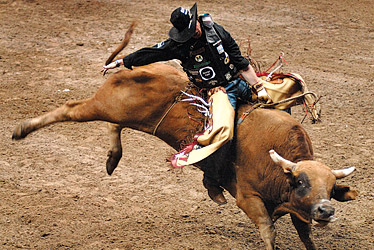 the physics of riding bulls essay The opposite of rape oxford legal studies research paper no 6/2016 in this essay, building on an earlier essay written with stephen shute.