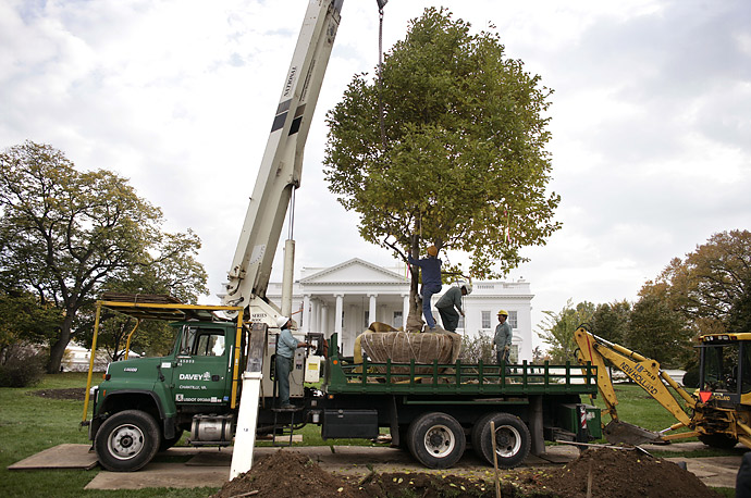 Members of the National Park Service get ready to plant a Magnolia tree in front of the White House.