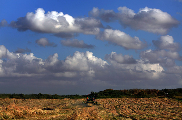 A farmer turns hay in a field outside the town of Hod Hasharon, central Israel.