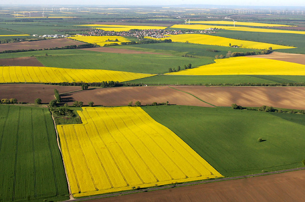 This German landscape is a patchwork of rapeseed fields between cornfields and other food crops.