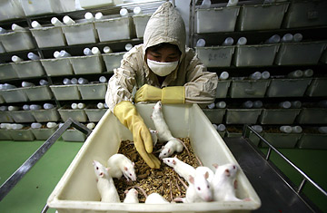 How Much Does Animal Testing Tell Us? - TIME
