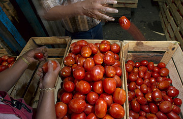 Workers separate tomatoes at the sprawling Central de Abastos market in Mexico City on June 10