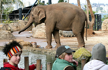Free Dumbo! Zoos Are Bad for Elephants - TIME