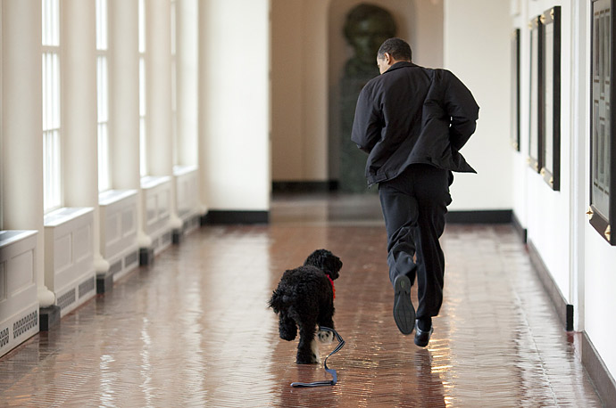 President Obama welcomes the family's new puppy Bo with a short trot down the hall at the White House.