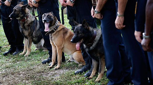 Police dogs stand with their partners