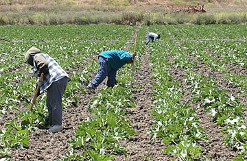article year farm workers thankful