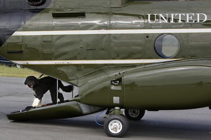The Obama family dog, Bo, walks off a military helicopter as it arrives at Martha's Vineyard.