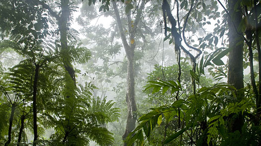 costa rica forest environmental protection green save preservation protect rain forest