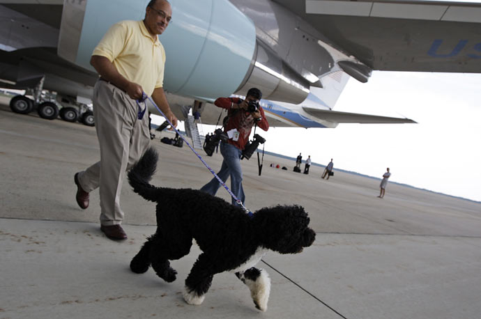 President Obama's dog Bo steps away from Air Force One at Andrews Air Force Base in Maryland.