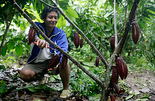 Cacao farmer Eduardo Gonzalez checks his plants in the jungle town of Lamas in Tarapoto, Peru Mariana Bazo / Reuters / Corbis