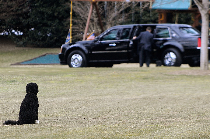 U.S. President Barack Obama's family dog