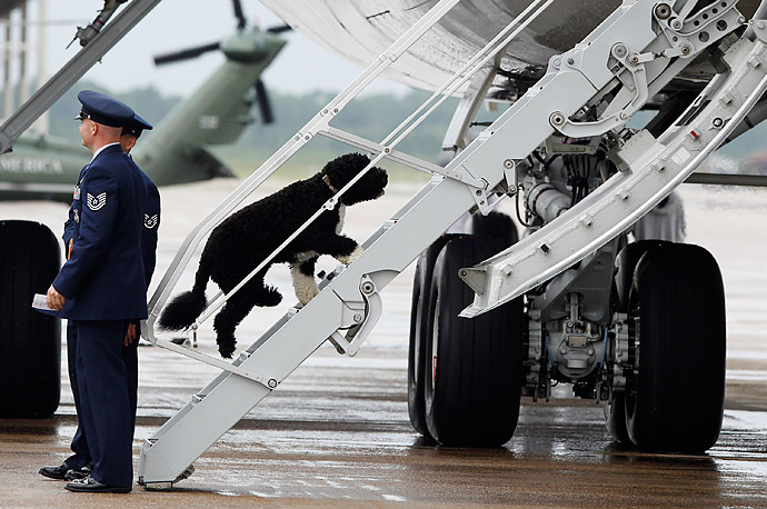 Bo, the First Dog, climbs the back stairs of Air Force One at Tyndall Air Force Base in Florida as President Barack Obama and the first family return to Washington D.C. from a weekend in Panama City Beach on the Gulf coast.