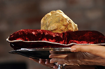 President Obama will be rewarded Giant White Truffle