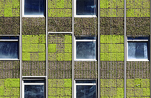 Upwardly Fertile: The Rise of the Vertical Garden