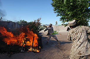 Mexican army personnel burn marijuana plants at a plantation discovered near San Quintin, Baja California, July 15, 2011 Alexandre Meneghini / AP  Read more: http://www.time.com/time/world/article/0,8599,2084224,00.html#ixzz1TKpWT0iY