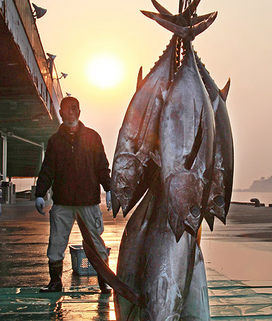 image: Tuna unloaded for the first time after the March 11 tsunami and earthquake disaster are seen at a fish market in Shiogama, Miyagi prefecuture, on April 14, 2011.