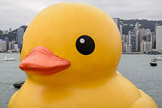 The 54-feet inflatable Rubber Duck art installation is seen at the Victoria Harbour in Hong Kong on May 2, 2013.