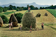 The whole Borca family, from Breb, puts finishing touches on one of the 40 haystacks it makes each summer.