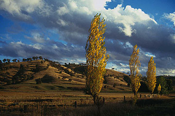 A landscape near Wagga Wagga in New South Wales, Australia