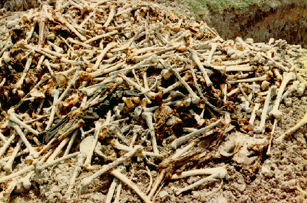 The Legacy Of Pol Pot  Photo Essays  Time