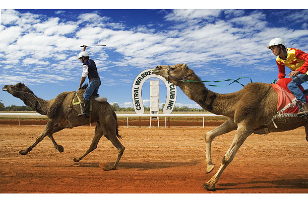 The Great Matilda Camel Races
