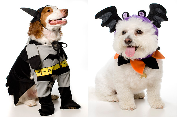 Halloween pets animals dogs cat costume