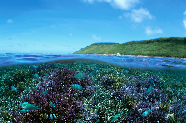 essays about coral reefs Free essay on research paper on coral reefs and their habitat available totally free at echeatcom, the largest free essay community.