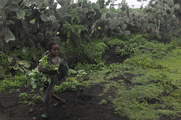 Ethiopia Green starvation food crisis hunger death malnutrition doctors without borders