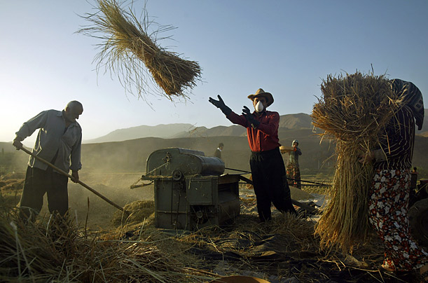 The World's Harvests - Photo Essays - TIME