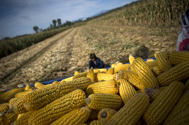 The World's Harvests Farmers around the globe prepare their crops for market