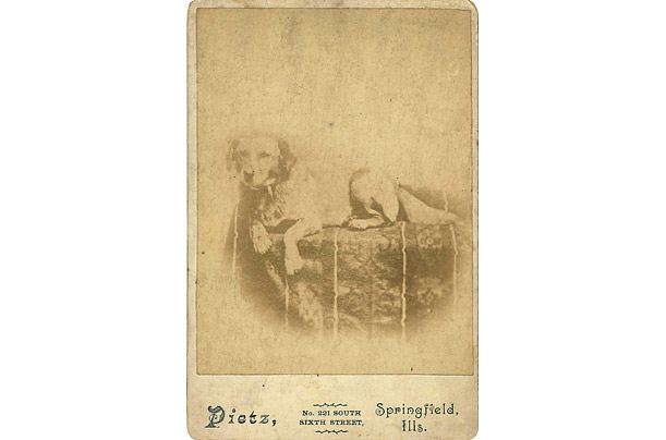 This floppy-eared rough-coated dog of unknown ancestry lived with Lincoln in Springfield, Ill., for the five years before he became President.