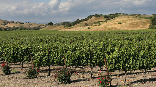 Santa Ynez Valley, California