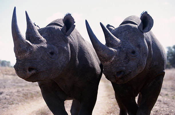 Photos: 10 Animals Facing Extinction.