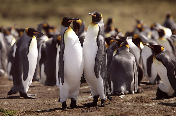penguins antarctica climate change