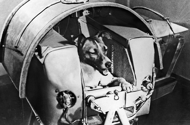 dog in space apollo - photo #46