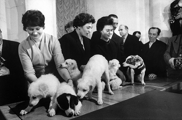 Handlers at the Soviet Academy of Sciences show off some of the dogs in their space program.