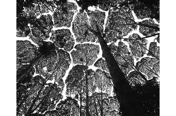 For over 20 years, Magnum Photographer Stuart Franklin has been traveling the world exploring man's relationship with trees