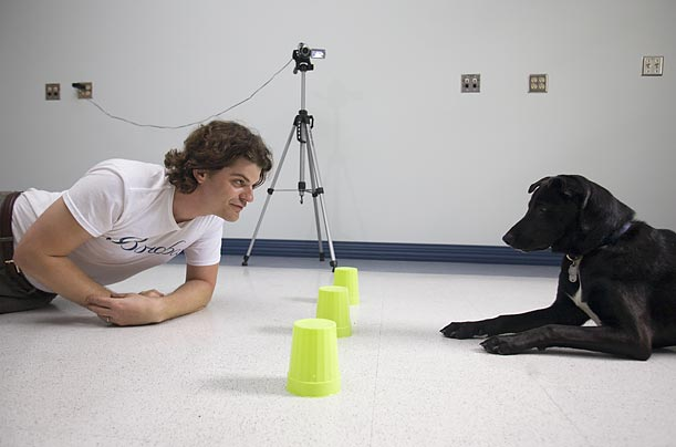 Brian Hare, a professor of evolutionary anthropology at Duke University, has developed an experiment to test whether dogs have an innate ability to understand human gestures.