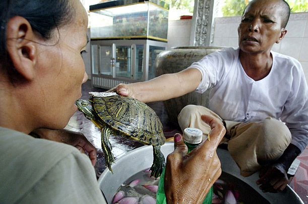 A nun holds a terrapin to the mouth of a villager in Kandal province, near Phnom Penh. The animal's touch is believed to cure rheumatism and other bodily ailments.