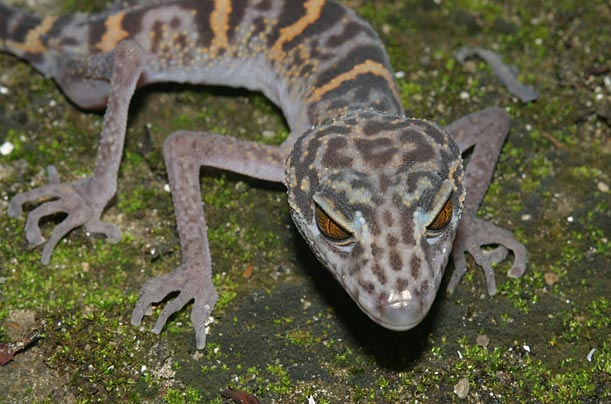 New Species from the Mekong Delta