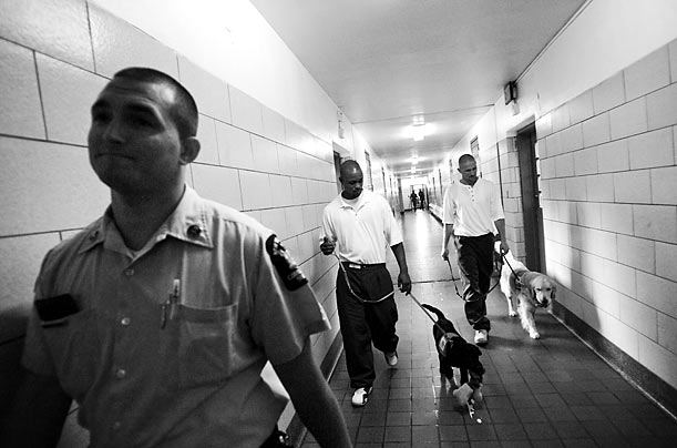 Puppies Behind Bars Inmates Sign Up to Train Service Dogs and Get a Little Something in Return Gloria Gilbert Stoga beacon new york jail prison inmates Radhika Chalisani / Redux