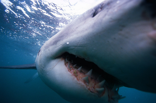 shark net essays Essays by josh kaufman  best of joshkaufmannet  the personal mba  meets the 'cranky middle manager' have business schools jumped the shark.