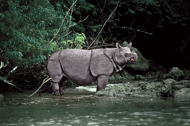 10 species on the brink of extinction endangered species animals