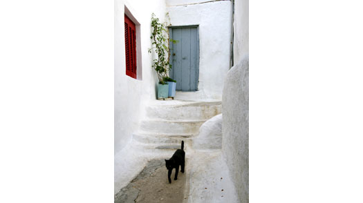 Black cat walking through steep narrow path in quarter of Anafiotika